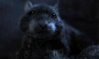 Історія одного пацюка