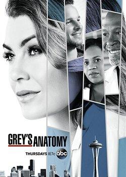 Анатомія Грей
